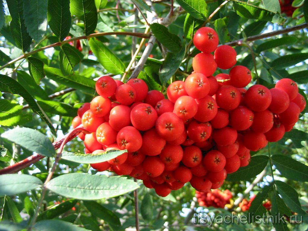 produkty-povyshayushhie-gemoglobin-v-krovi
